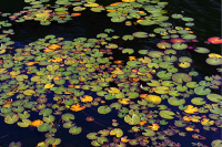 http://alexandermeyer.org/files/gimgs/th-51_After Alex Katz Homage to Monet.jpg